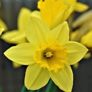 Ostermontag ist ein bundesweiter gesetzlicher Feiertag.