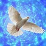 Die Taube gilt als Symbol für den Heiligen Geist.